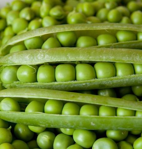 SHELLING PEAS ALDERMAN