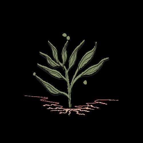 Let Them Play Toys