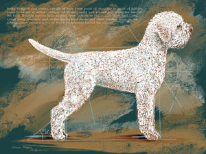 Lagotto Romagnolo Illustrated  UK Breed Standard - Body. Limited edition Print