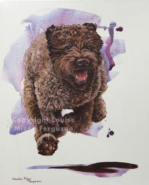 Lagotto Speed