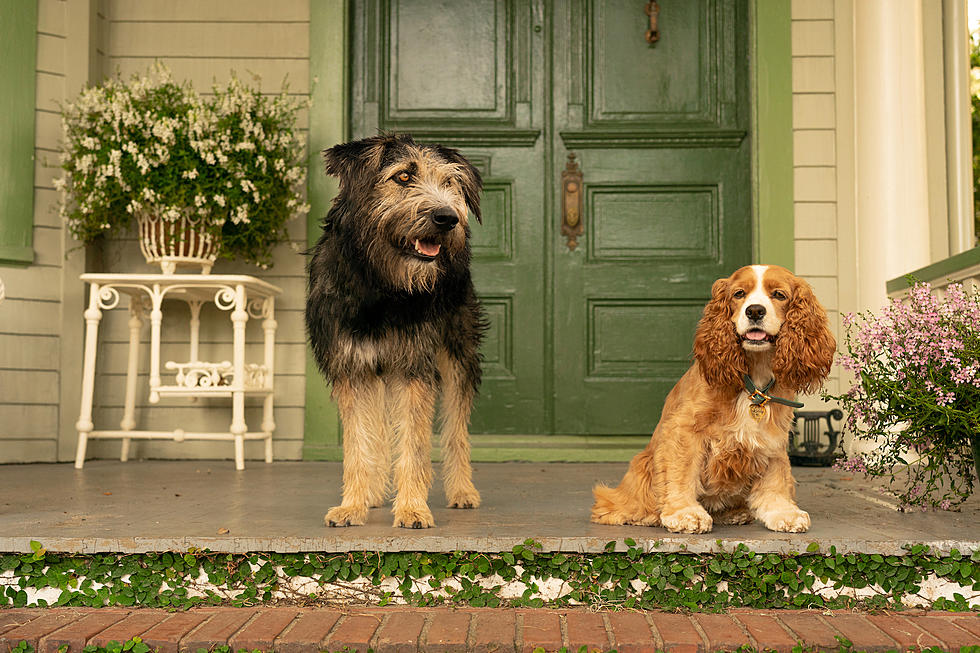 7 Pet Movies You Can Binge On With Your Pet