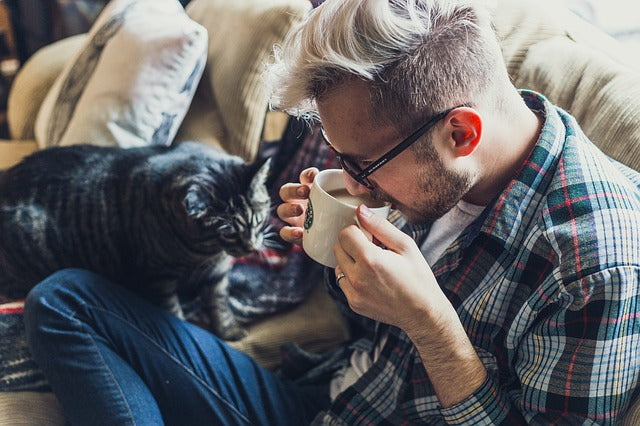 Keeping your pets engaged indoors: How you do it right