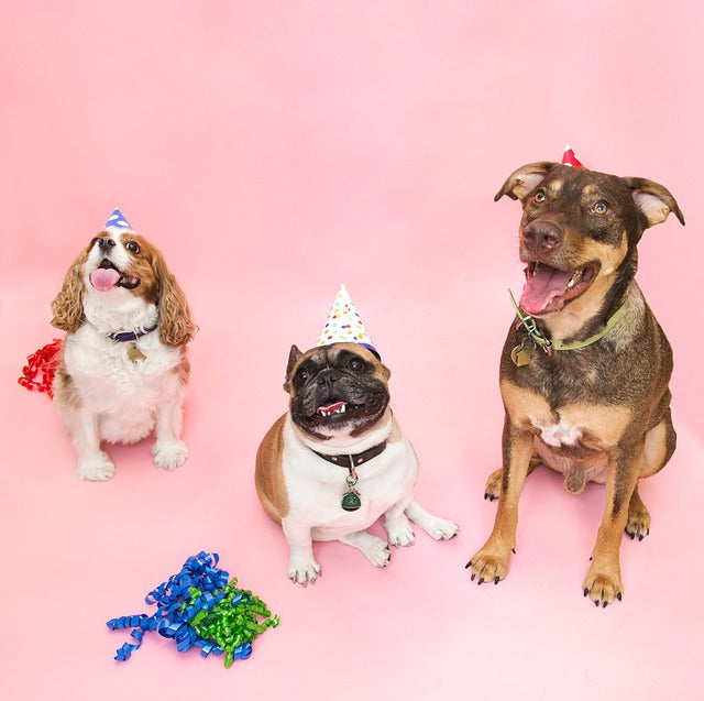 How to Throw the Best Party for Your Pet
