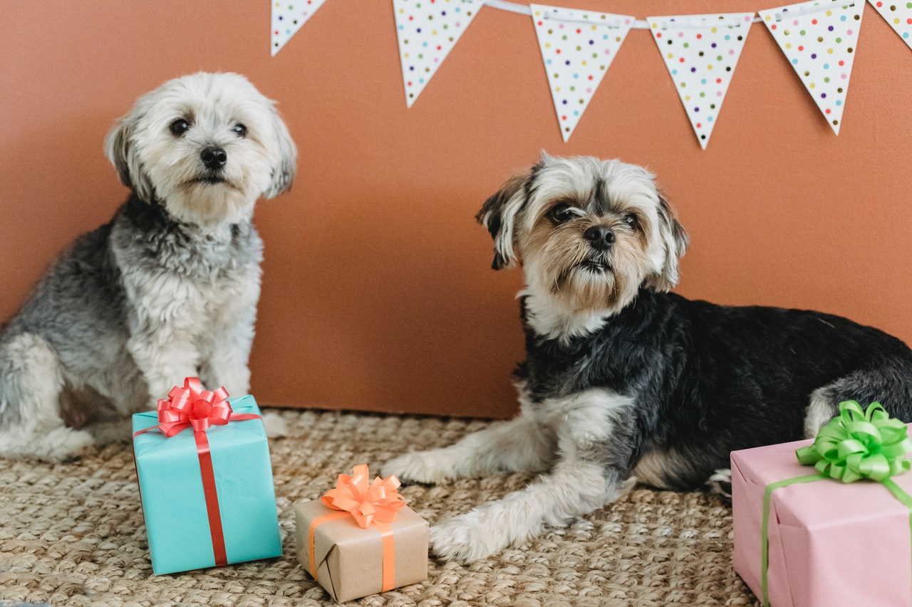 10 Best Ideas of Personalized Gifts for Your Pet