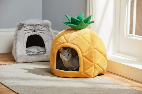 cat pineapple bed
