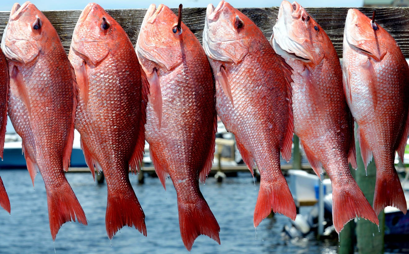 The Secrets to Catching More Red Snappers