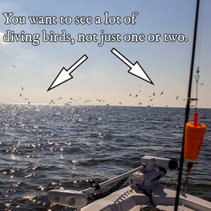 When, Where & How To Fish For Speckled Trout Under Diving Birds