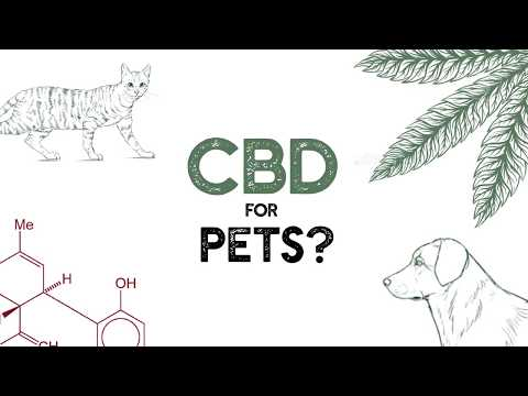 Load and play video in Gallery viewer, Kong Dispenser CBD Pet Tincture
