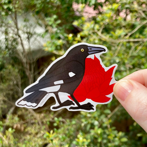 Currawong and Waratah Vinyl Sticker