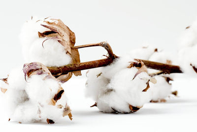 Why does organic cotton matter?