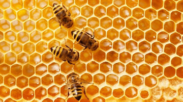 What Is the Difference Between Raw and Regular Honey?