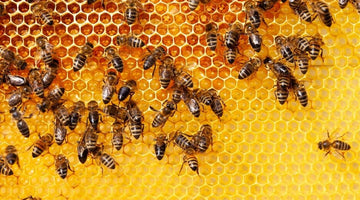 What You Should Know about Honeycomb Honey