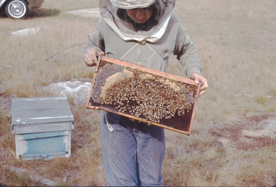 natural honey bee farm
