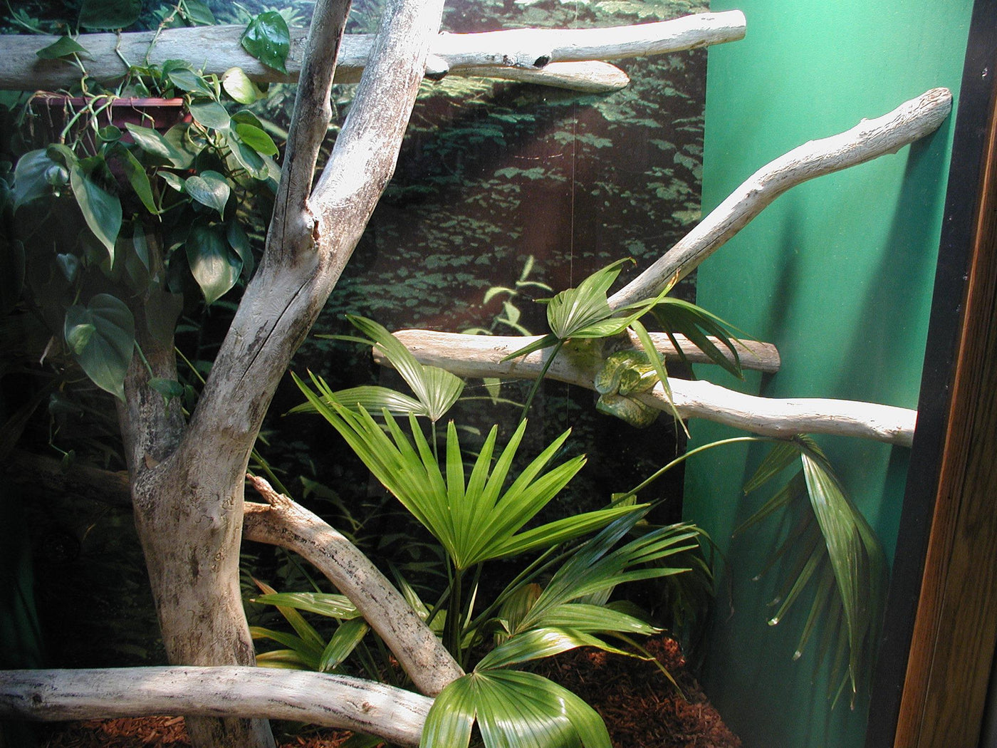 Real Logs & Branches for Reptiles