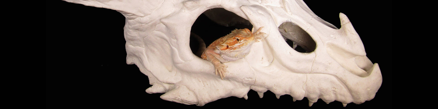 Reptile hides or hideaways are essential for most reptiles basic needs as they keep your pet reptiles from stressing out and will help them to feel safe.