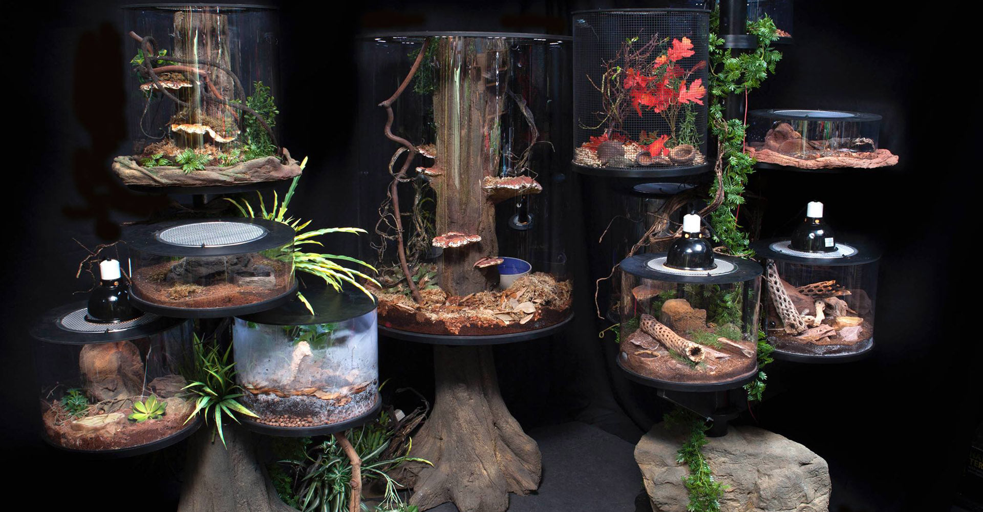 A-Round Nature – 360 Degree Terrariums