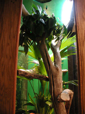 "For dry reptile cages, wood can work well and has been the ""go to"" choice for DIY reptile enthusiasts for decades"