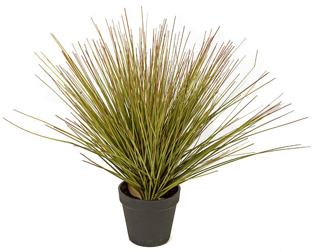 Mixed Onion Grass Bush - 18 Inch