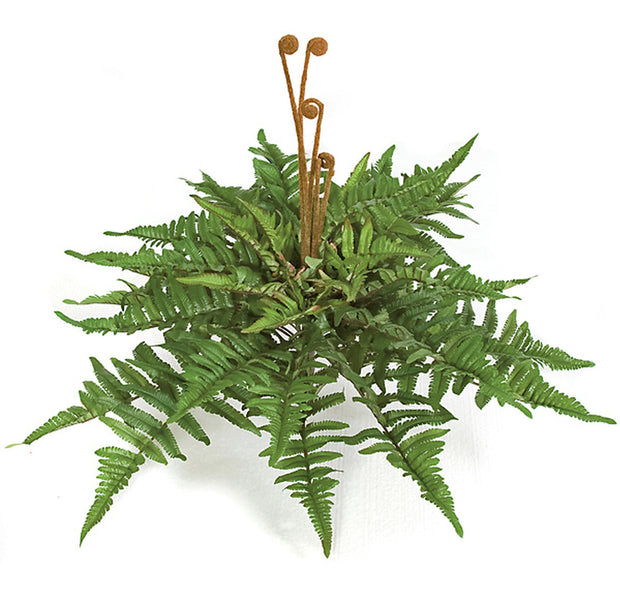 Mountain Fern Bush - 24 Inch