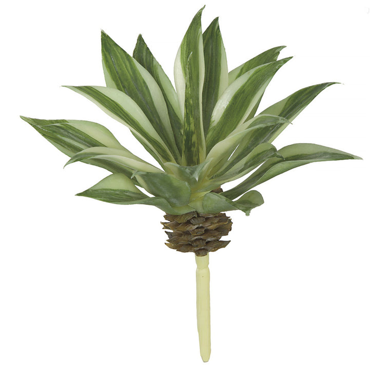 Variegated Agave Pick - Green/Cream - 6 Inch