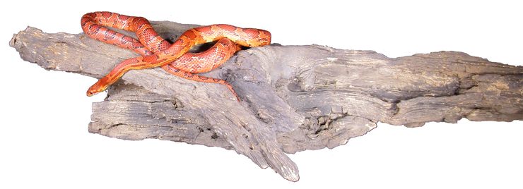 Reptile Basking Log is perfect for a wide variety of reptiles