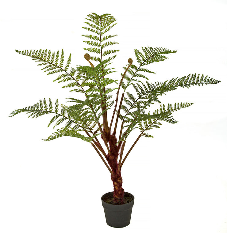 Large Potted Fern Plant - 40 Inch