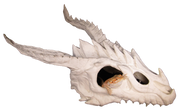 dragon skull large hide with bearded dragon inside