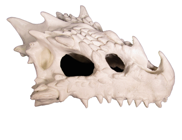 small dragon skull hide