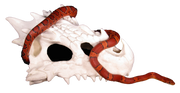 small dragon skull hide with corn snake