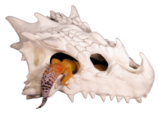 small dragon skull hide with leopard gecko