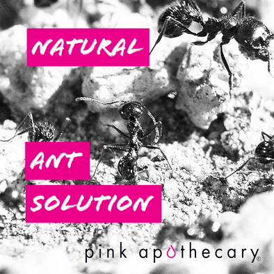 Natural Ant Solution