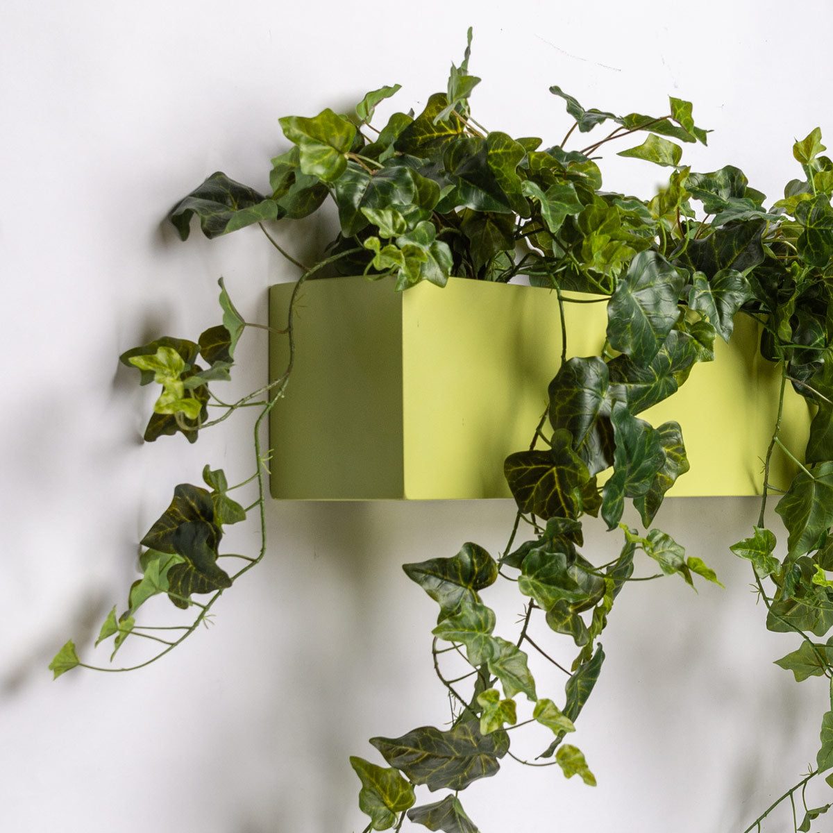 Green Wall, Ivy Planter for Movable Partition Wall