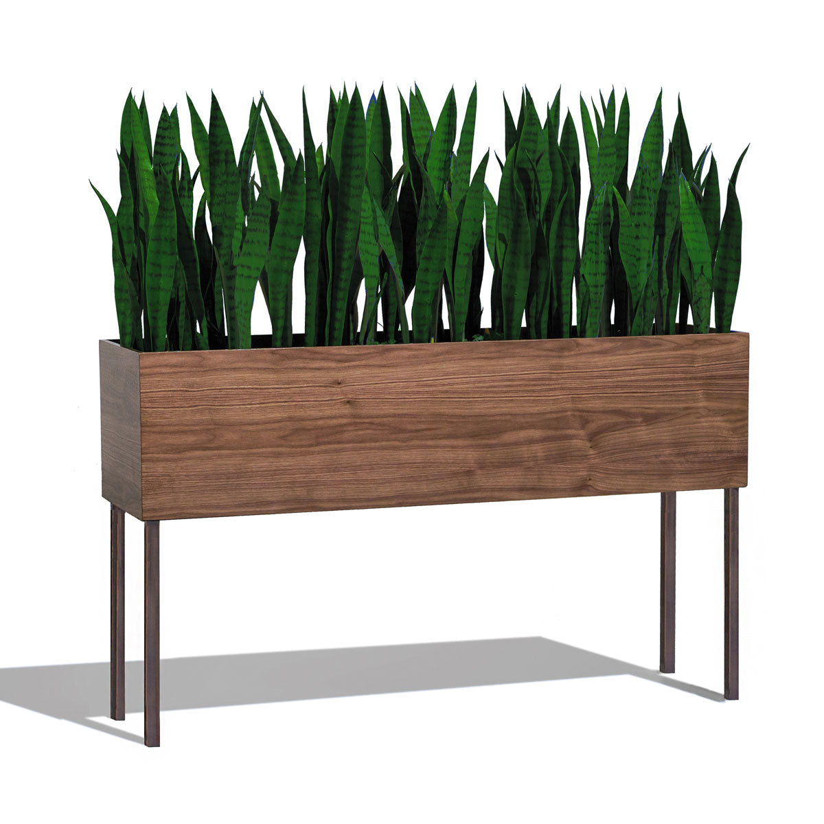 Sansevieria in Rectangle Planter w/ Legs