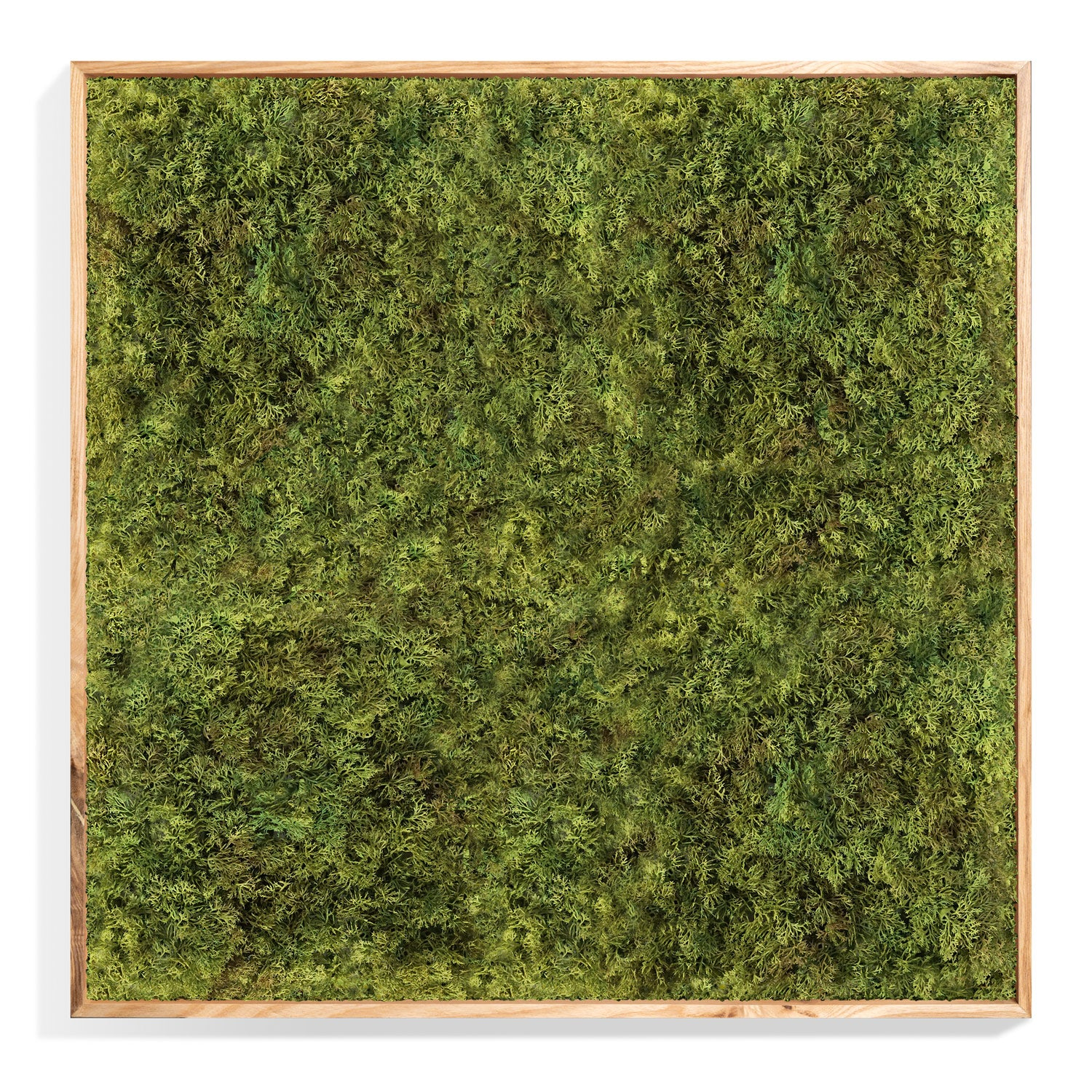 Green Wall: Permanent Botanical Textured Moss in a shadow box. (front view)