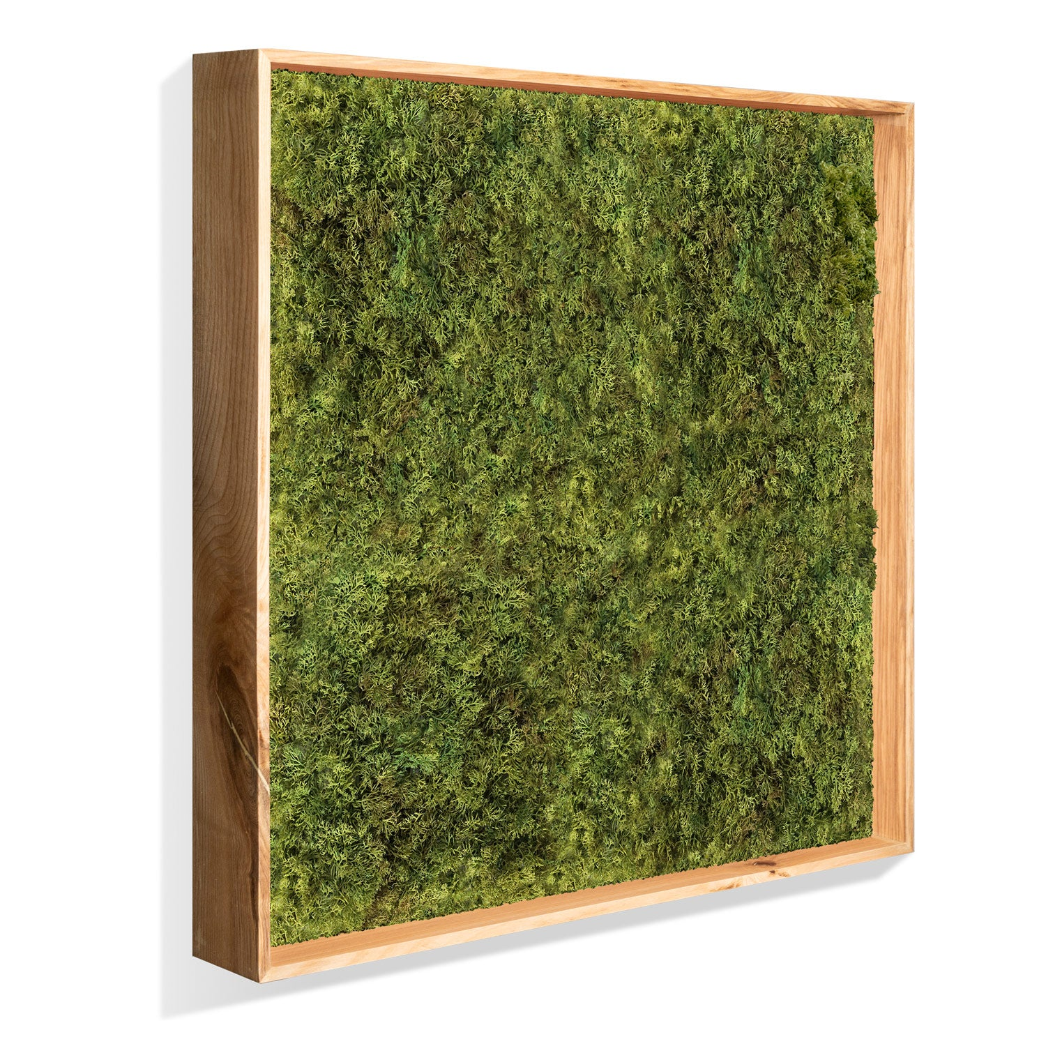 Green Wall: Permanent Botanical Textured Moss in a shadow box. (quarter view)