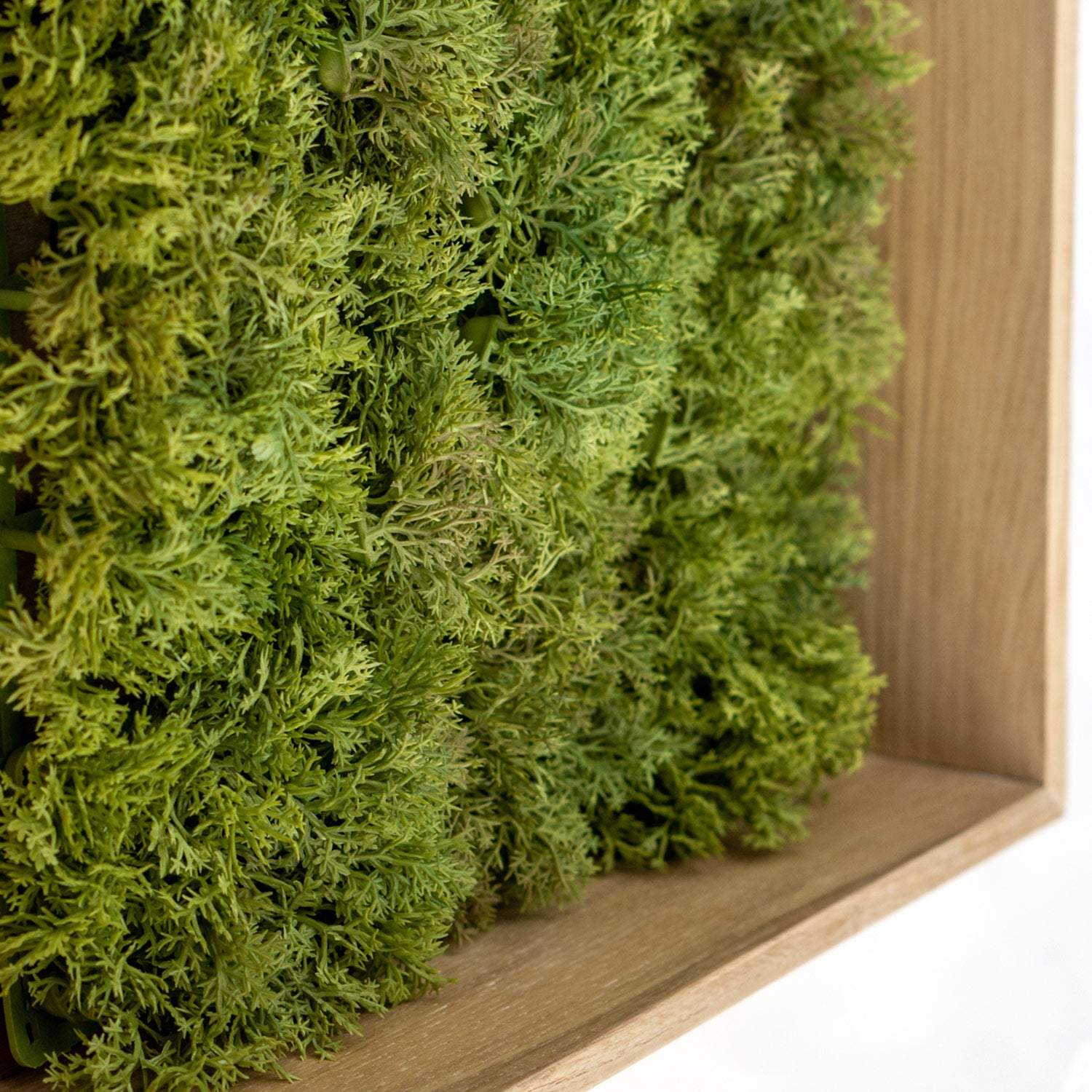 Green Wall: Permanent Botanical Textured Moss in a shadow box. (close up)