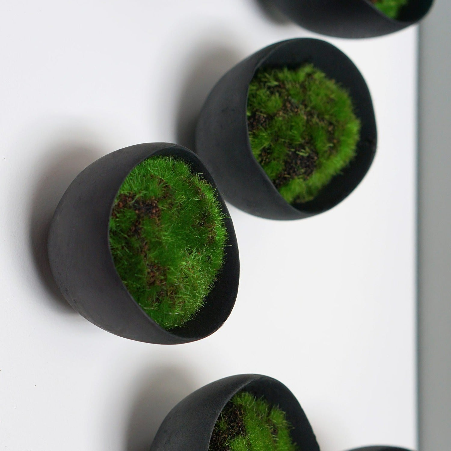 Green Wall, Moss w/ Wall Play™, Seed Black