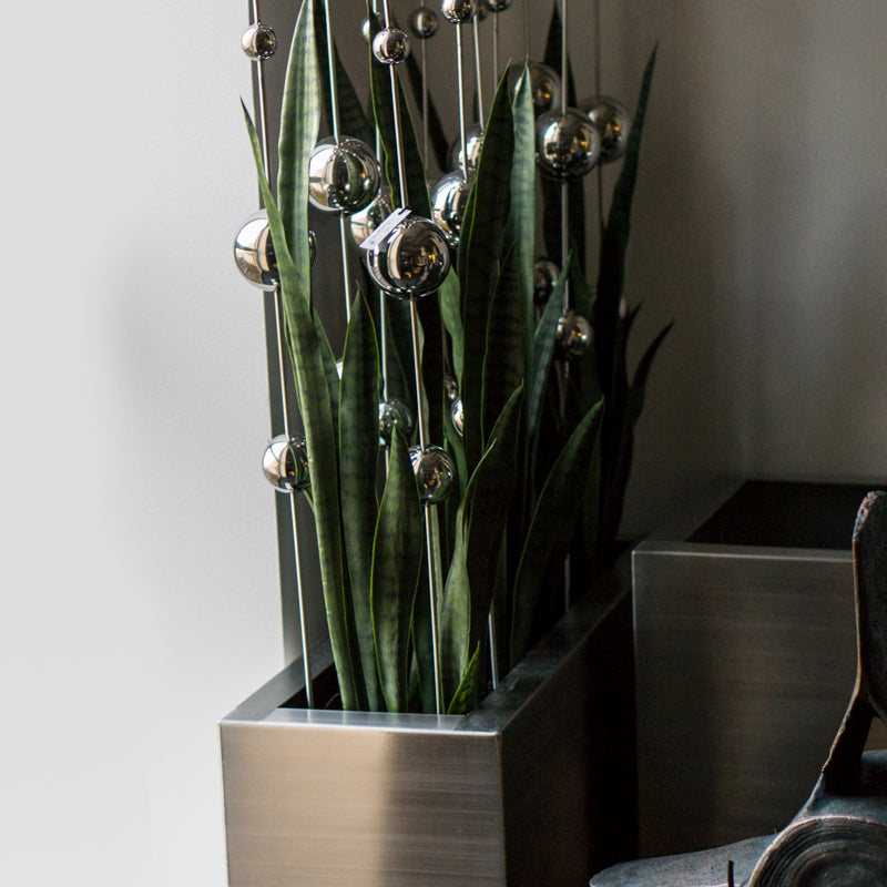 Sansevieria & Stainless Ball Sway in Rectangle Planter