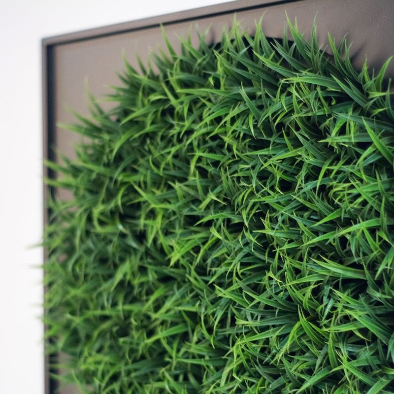 Green Wall, Mini, Curly Grass