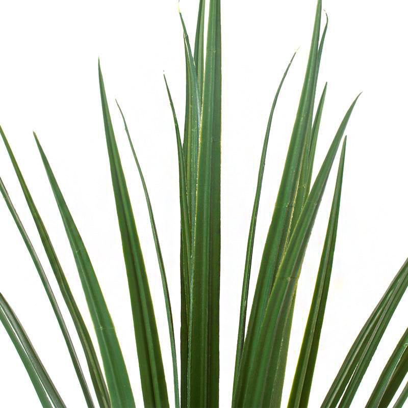 Grass: Liriope in Extra Large Linea Planter