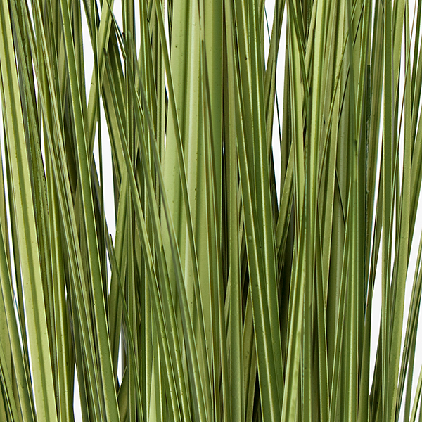 Grass: Japanese Grass in Rectangle Table Planter