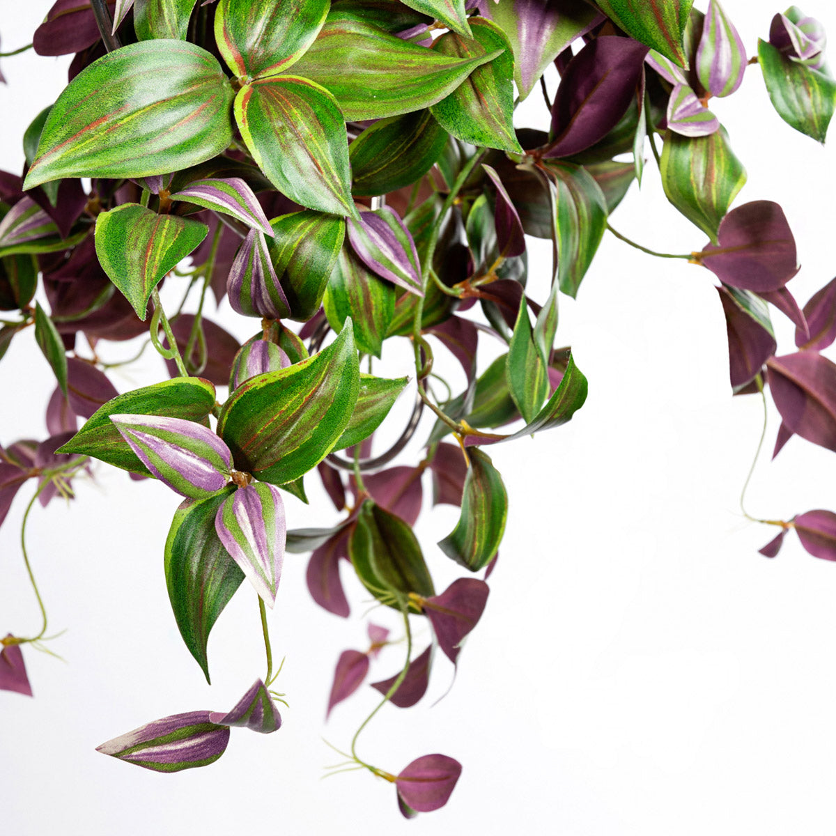 Bush: Wandering Jew