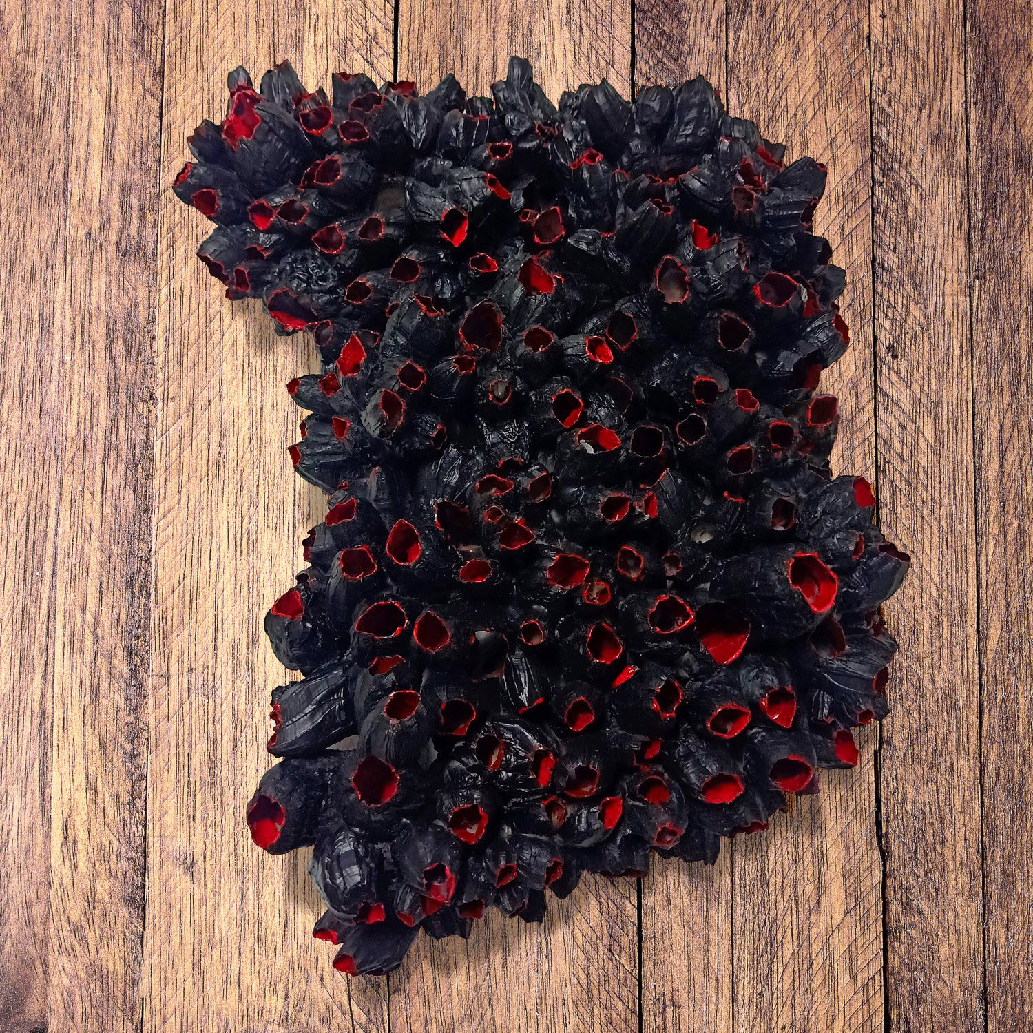 Barnacle Sculpture, black/ red