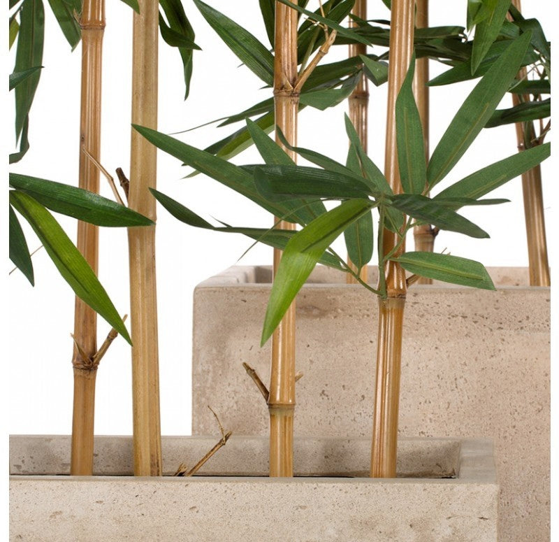 Bamboo Tree in Urbano Rectangle Planters, Set/ 2