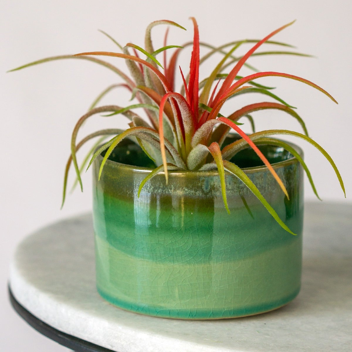 Tillandsia Ionantha Red in Geode Green Planter