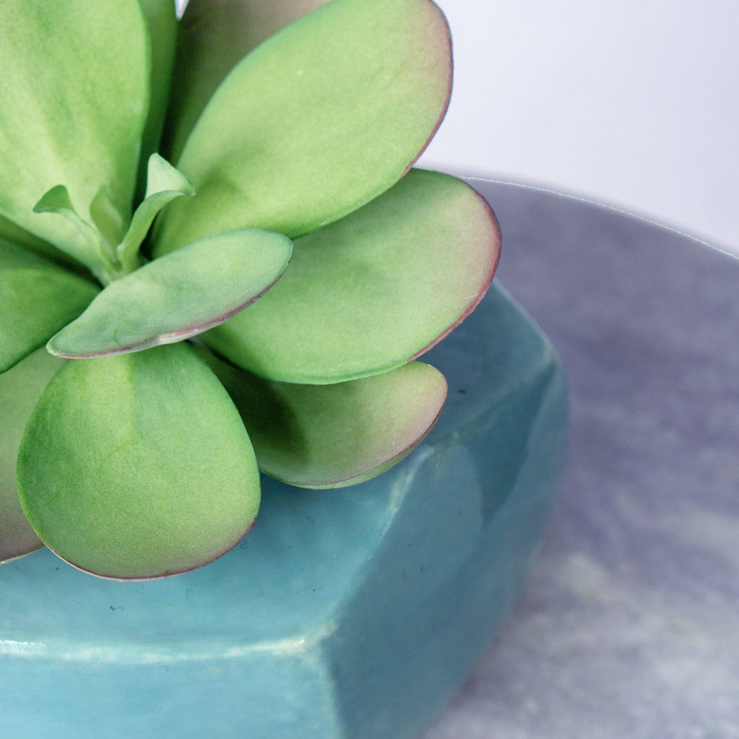 Paddle Kalanchoe in Hexa Planter