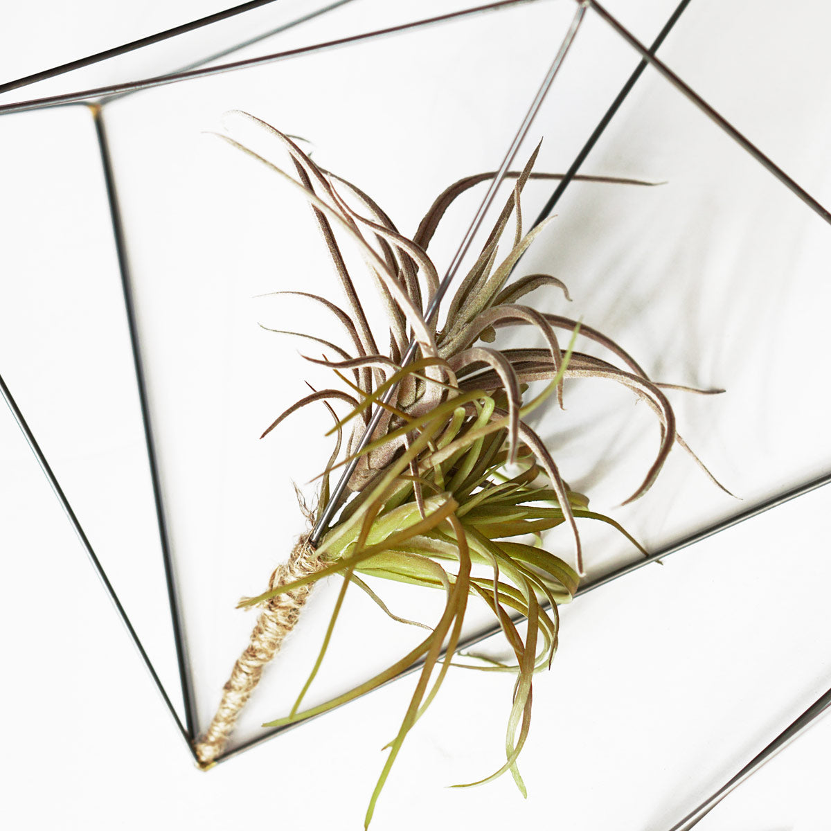 Air Plants on Wire Crystals Set/ 3