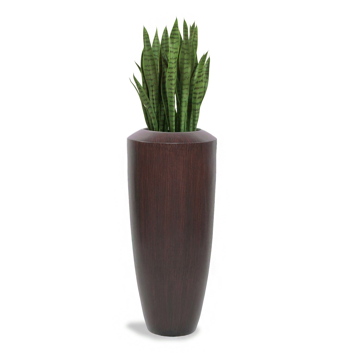 Sansevieria in Barrel Planter SM