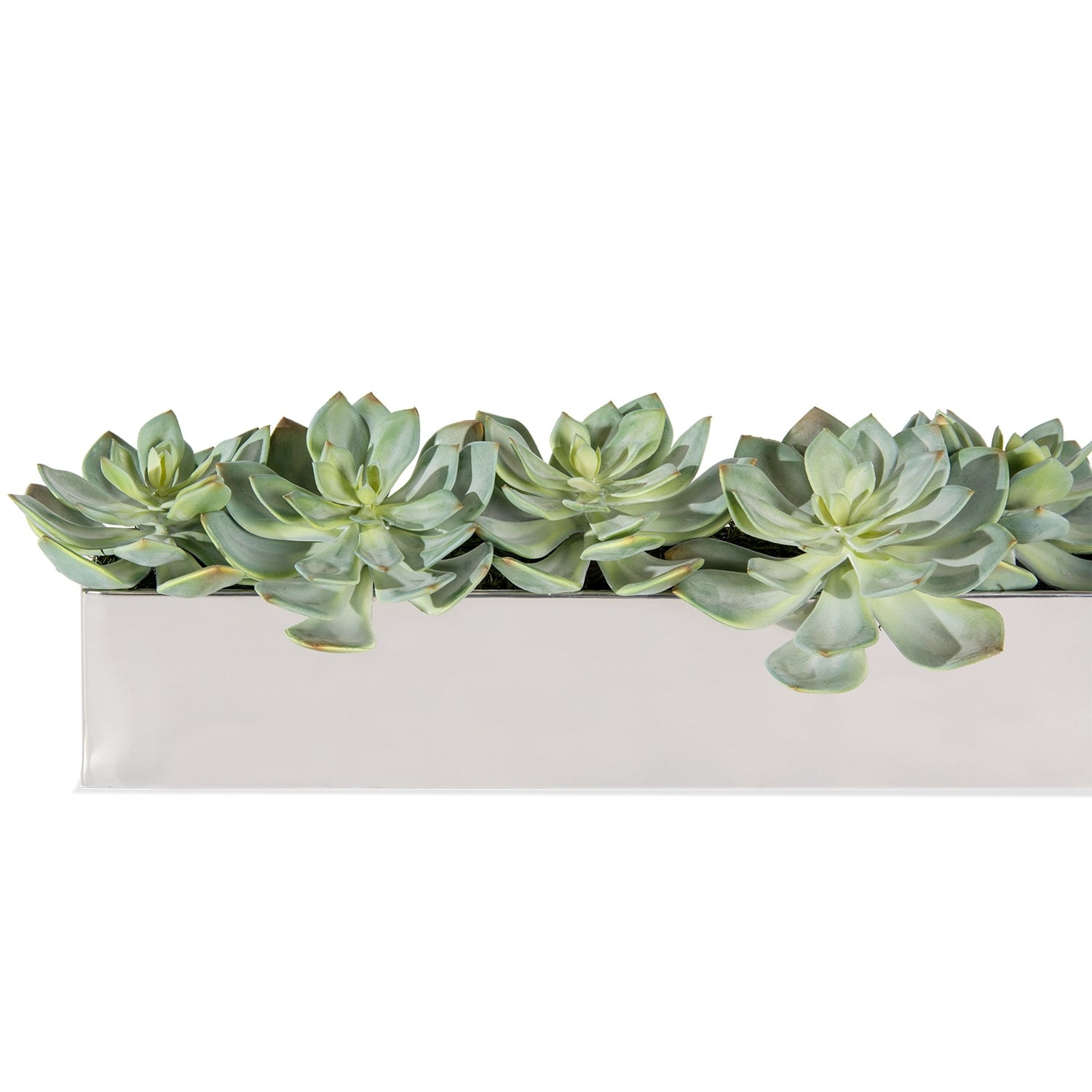 Grapto in Rectangle Stainless Table Planter