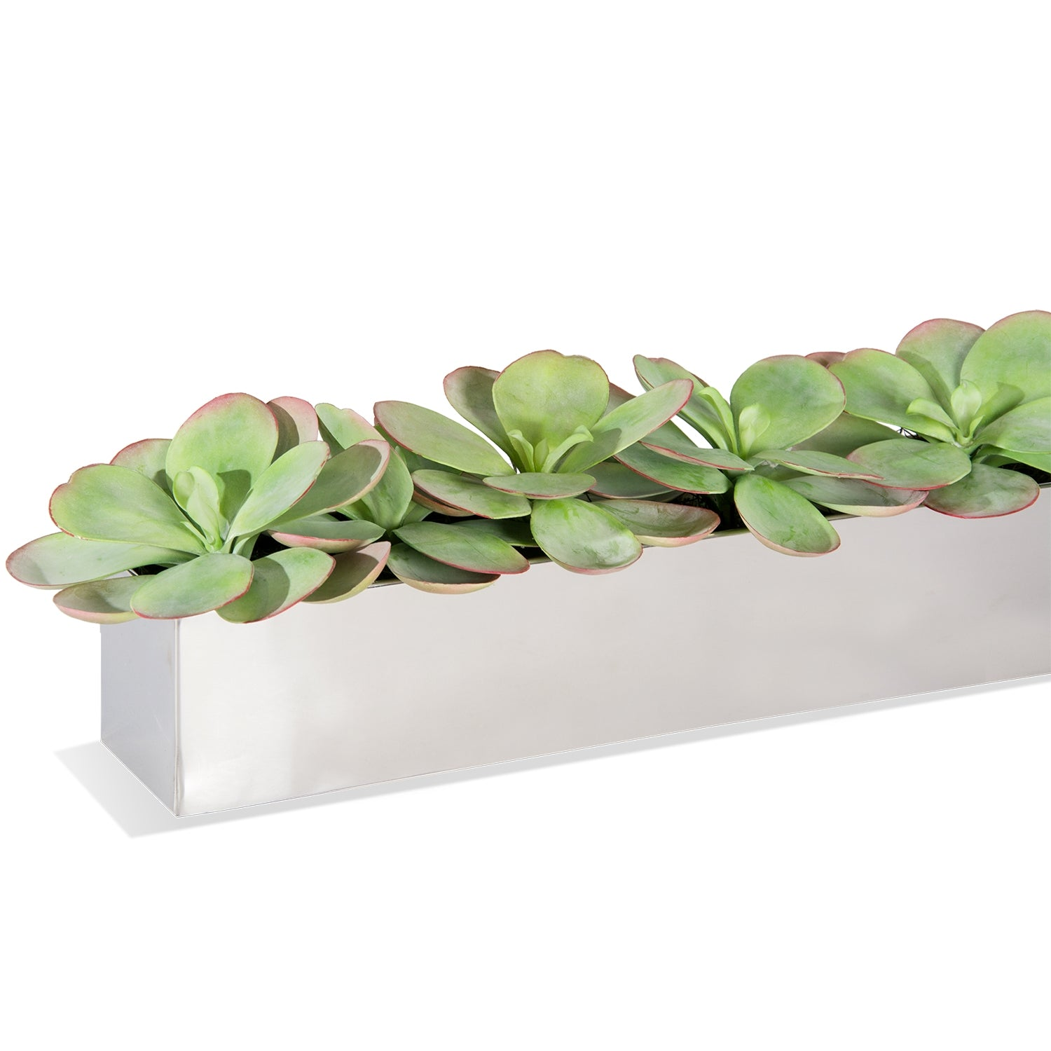 Paddle Kalanchoe in Rectangle Stainless Table Planter